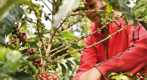 Paulig tekee johdonmukaista työtä kahviketjun vastuullisuuden hyväksi